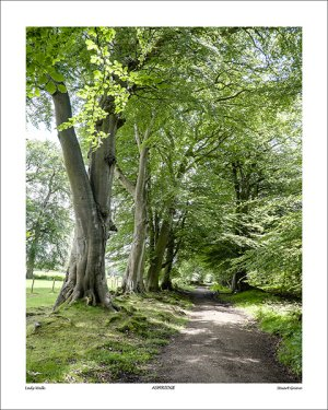 Photograph - Lady Walk, Ashridge - by Stuart Grieve