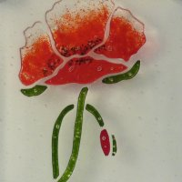 Red Poppy - fused glass wall art by Vitreus Art